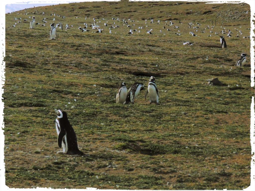 Isla Pinguins